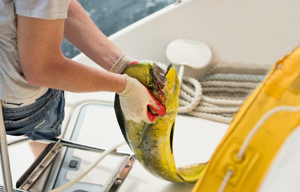 Ловля рыбы: выбор насадки